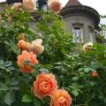 Pittock Roses