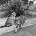 Deja Vu Cats