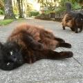 Deja Vu Cats 2