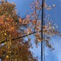 Fall Wire