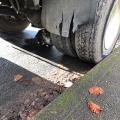 Shy Truck Cat