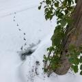 Snow Day Bird Tracks
