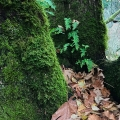 Tualatin Moss