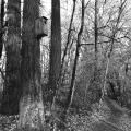 Tualatin Trail