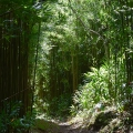 Bamboo Forest, Oahu, Hawaii