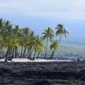 Coconut Scene 1, Kailua Kona, Big Island, Hawaii
