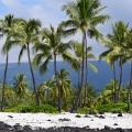 Coconut Scene 2, Kailua Kona, Big Island, Hawaii