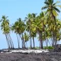 Coconut Scene 3, Big Island, Hawaii