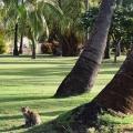 Coconut Cat, Waimea, Kauai, Hawaii