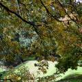Fall Mount Tabor