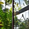 Green Window, Kailua Kona, Big Island, Hawaii