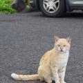 Parking Lot Cat, Kauai, Hawaii