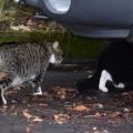 Catfrontation 2