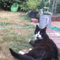Caturday Neighborhood Cat