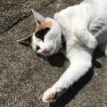 Cute Sidewalk Kitty