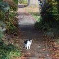 Fall Cat 2