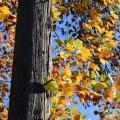 Fall Pole