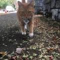 Fall Weather Feline