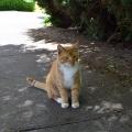 Friendly Cat 2