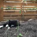 Garden Mulch Cat Nap