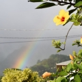 Hibiscus, Rainbow, Wire, Manoa Valley, Hawaii