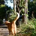 Orange Fall Cat