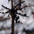 Overcast Fall Plant