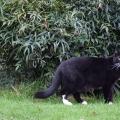 Prowling Yard Cat