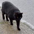 Prowling Sidewalk Kitty