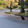 Road Cat #2