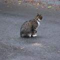 Road Cat 3