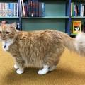 Salem Bookstore Cat