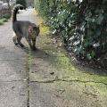 Scaredy Hedge Cat