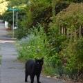 Spring SE Strolling Sidewalk Cat