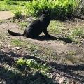 Skittish Kitty