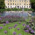 Aliums, Kew Gardens, London
