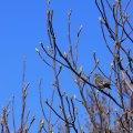 Blue Sky Birdie
