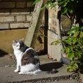 British Cat 2, London