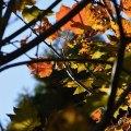 Crisp Fall Light