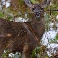 Deer, Washington