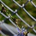 Fence Flower