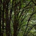Lush Canopy, Hoyt Arboretum