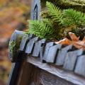 Mossy Roof, Portland Japanese Garden