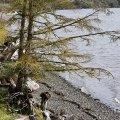 Oregon Coastal Tree, Tillamook, Oregon