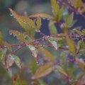 Rainy Foliage