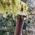 Snow Pole, Washington