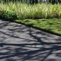 Spring Shadows, Kew Gardens, London