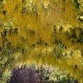 Yellow Canopy, Kew Gardens, London