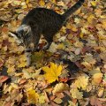 Yes Its Fall Plus Cat