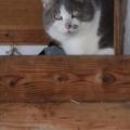 Caturday Shed Cat, Washington
